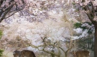 Parco giapponese durante la stagione dell'Hanami