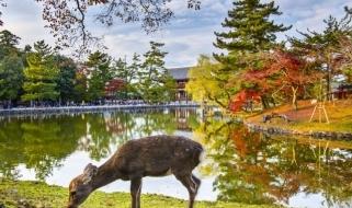 Veduta del Parco di Nara, meta imperdibile di qualunque viaggio in Giappone