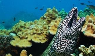 Gli spettacolari fondali da scoprire con un viaggio in Oman all'insegna del diving