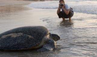 Lo spettacolo delle targarughe marine sulle spiagge dell'Oman