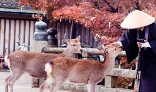 Vacanze in Giappone - I cervi di Nara