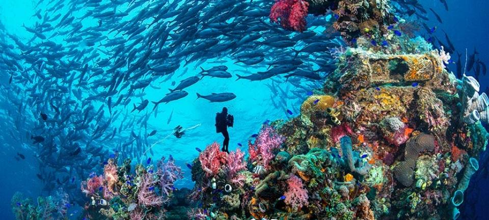 Diving in Micronesia - la ricca fauna micronesiana