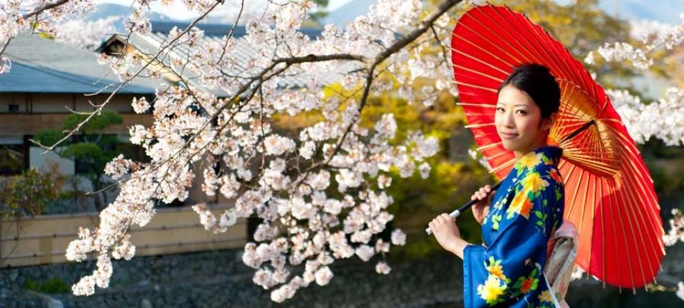 Tour in Giappone - Ragazza in kimono sorregge il tipico wagasa, l'ombrello rosso delle geisha, davanti ad un ciliegio in fiore