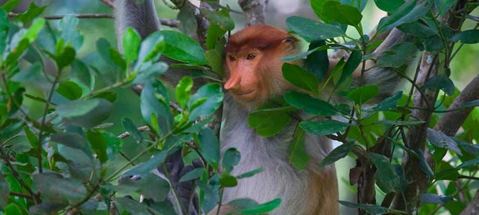 Malesia: foto ad un esemplare della fauna tipica locale